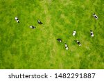 Herd Of Cows Grazing From Abov...