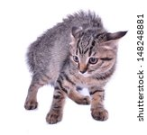 small 3 months old kitten... | Shutterstock . vector #148248881