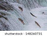 Sockeye Salmon Jumping Up...