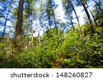 Green Shrubs With Blueberry...