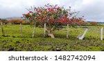 Tropical Erythrina Crista Gall...