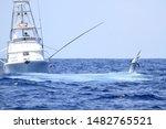 Black Marlin Jumps Near Game...