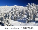 Frozen Mountain Forest On A...