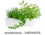 fresh herbs in planter  thyme ... | Shutterstock . vector #148344035