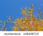 Golden Birch Leaves On Vibrant...
