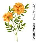 marigold flowers isolated on... | Shutterstock .eps vector #1483798664
