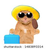 Smiling Mastiff Puppy In Summer ...