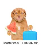 Smiling Puppy Holding Suitcase...