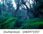 puerto rico  el yunque national ... | Shutterstock . vector #1483971557