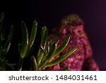Stock photo blurry bigfoot peaking through plant life against a dark background with colored gels 1484031461