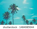 Coconut Palm Trees With Blue...