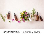 Medical Flowers Herbs In Morta...