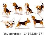 Cute Cool Beagle Puppy Set....