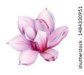Tender Pink Magnolia Flower...