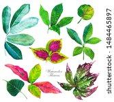 botanical illustration with... | Shutterstock . vector #1484465897