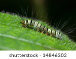 caterpillar on leaf   Shutterstock . vector #14846302