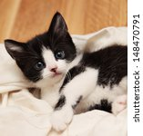 Black And White Kitten Laying...