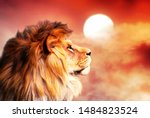 African Lion And Sunset In...