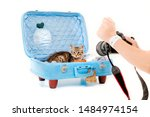 Cat Sits In Suitcases With...
