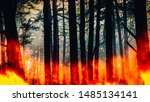 Raging Pinewood Forest Fire  ...