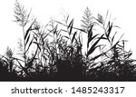 Silhouette Of A Cattail Grass....