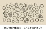 many hand drawn fruits. food... | Shutterstock .eps vector #1485404507