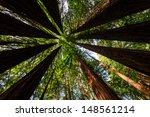 Bright Green Foliage Creates A...