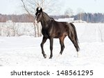 Black Horse Walking In Winter