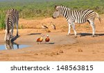 zebra | Shutterstock . vector #148563815