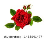 Red Rose Flowers In A Floral...
