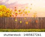 autumn maple tree at backyard | Shutterstock . vector #1485827261