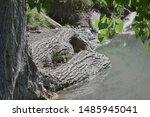 Large Swamp Wetland Log In...
