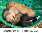 Stock photo many cute puppies in the basket puppies look at the camera puppy sleeping on a blanket cute dogs 1486057961