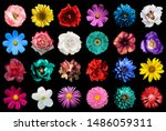 mega pack of natural and...   Shutterstock . vector #1486059311