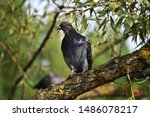 Cute Pigeon Sitting On The...