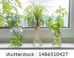 Indoor Window Planting Rooting...