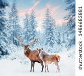 Family Of Noble Deer In A Snowy ...