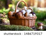 Mushroom Boletus In Wicker...