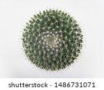 Top View Mini Circle Cactus No...