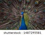 Beautiful Color A Majestic Blu...
