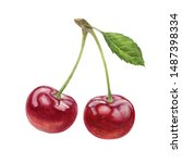 Cherry watercolor illustration isolated on white background - stock photo