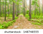 Fog in the forest - stock photo