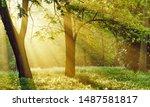 Sunrise Sunrays Filter Through...