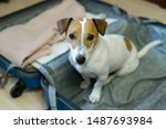 dog is sitting in suitcase.... | Shutterstock . vector #1487693984