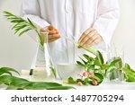 Medicinal Herbal Plant Analysis ...