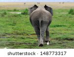 Rear View Of An Elephant