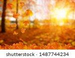 Autumn Leaves On The Sun. Fall...