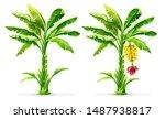 Set Of Banana Palm Tree With...