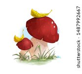 Two Mushrooms Boletus In The...