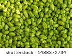 Green Ripe Hop Cones For...